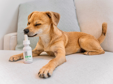 The Method To Produce Revenues From The Cbd Oil For Pet Dogs Sensation